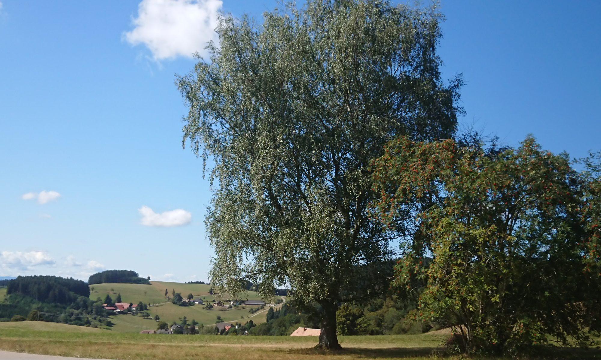 Ökologische Liste Gutach